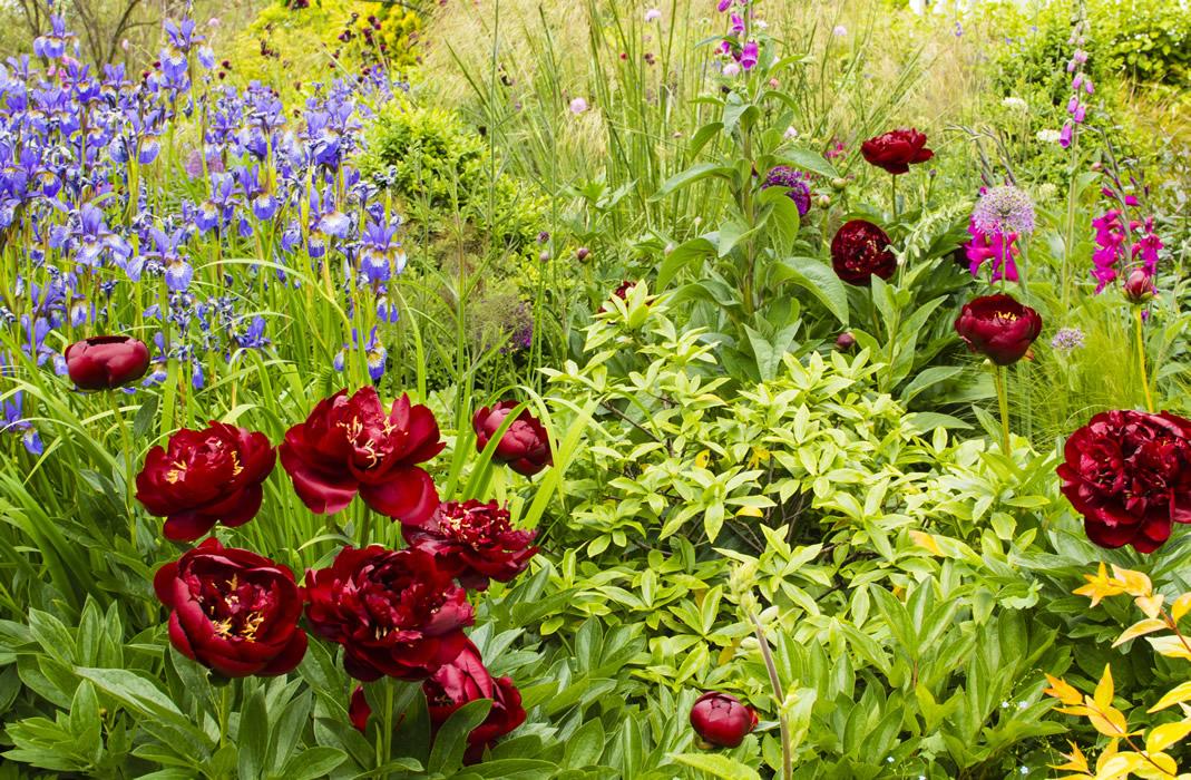 Garden Design and Landscape Designer in Harpenden