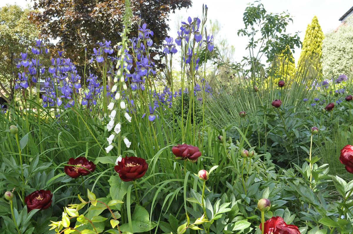jilayne-rickards-garden-design-7-1200