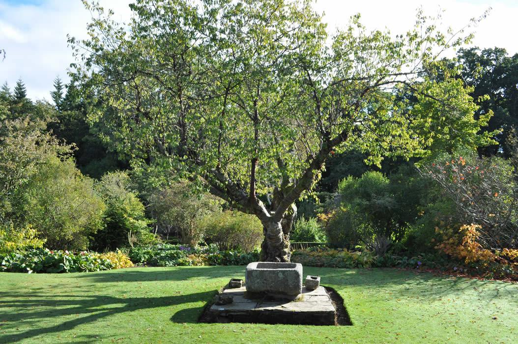 Garden Design Essex garden design and landscape designer in essex - jilayne rickards