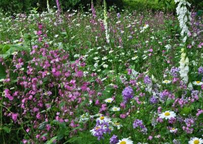 jilayne-rickards-garden-design-hidcote-06-2013-1200