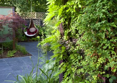 Wisteria climbing on pergola, swing seat with cushions, slate paving, Acer palmatum 'Burgundy Lace', Lonicera periclymenum 'Serotina