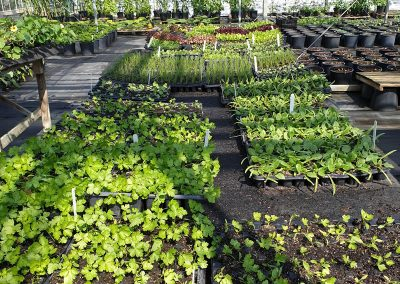 p-PaG-2jilayne-rickards-garden-designer