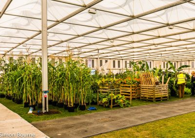 Plants in Marquee 03, CAMFED Garden, Chelsea - Build Day 9, London 2019- small