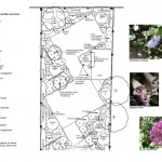 garden-design-planting-plan