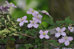 Spring planting design in a woodland garden