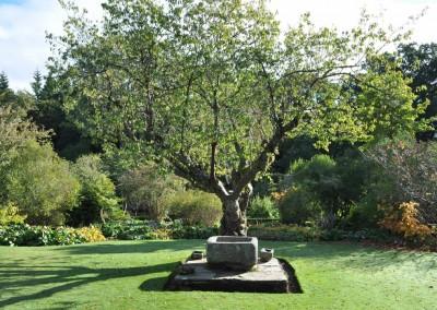 jilayne-rickards-garden-design-dsc_2034-1200