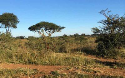 Trip to Zimbabwe 2018