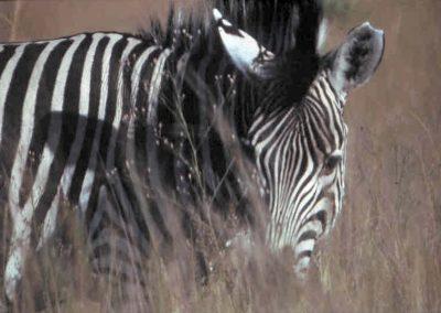 zsl-zebra-garden-desgner-north-london