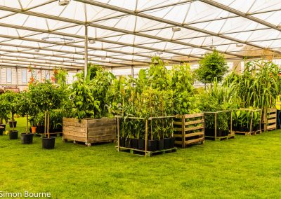 Plants in Marquee 01, CAMFED Garden, Chelsea - Build Day 9, London 2019- small