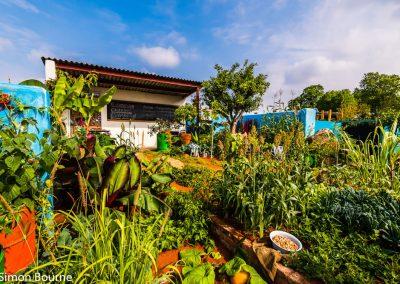 garden-design-CAMFED Garden 03, Chelsea - Press Day, London 2019- small-jilayne-rickards