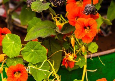 garden-design-CAMFED Garden Details 02, Chelsea, London 2019- small-jilayne-rickards