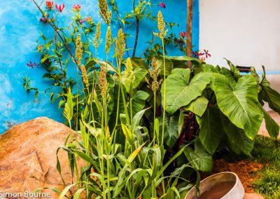 garden-design-CAMFED Garden Details 10, Chelsea, London 2019- small-jilayne-rickards