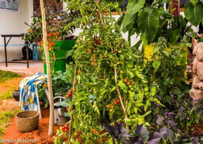 garden-design-CAMFED Garden Details 11, Chelsea, London 2019- small-jilayne-rickards